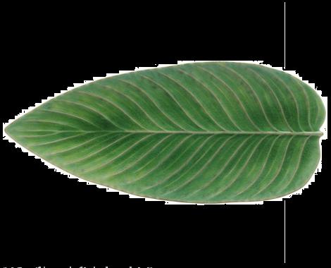 Serveringsfat Costa Nova Riviera lämnar grönt / svart 40 cm
