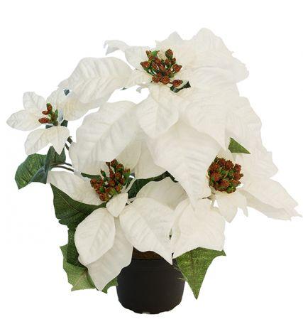 Mr Plant Julestjerne 35 cm