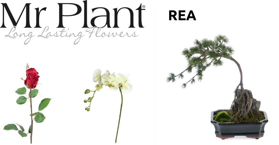 Plant rea
